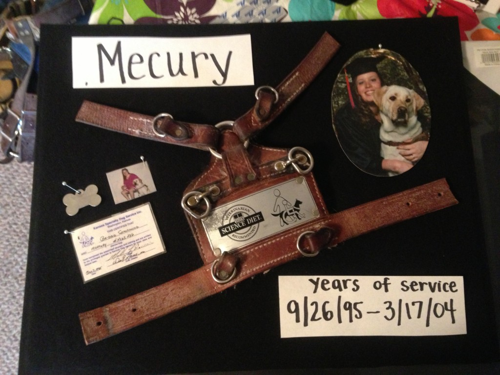 Shadow boxes for service dogs