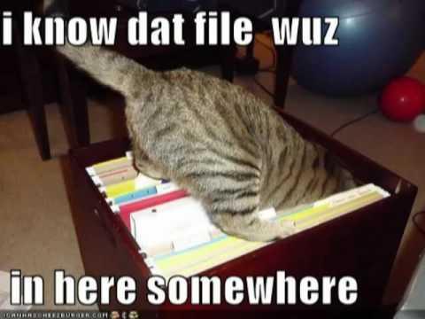 Cat-file-meme-organize